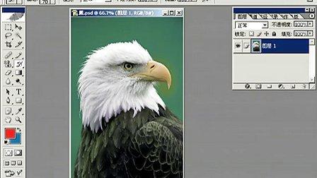 Fhotoshop从头学起视频Photoshop从头学起第19集