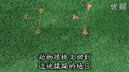 [热带雨林(丛林探险)--刚果野林