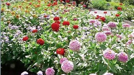 轻松音乐--花园的梦想和诗