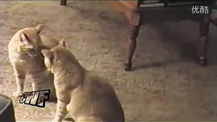 两只猫咪互相模仿,仿佛在照镜子_www.taopindian.com