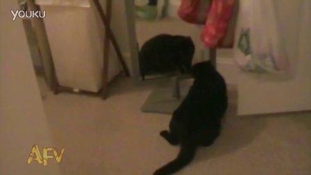 猫咪对着镜子中的自己抓狂