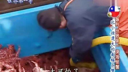 世界第一等20091111比小孩还要大的南极巨蟹