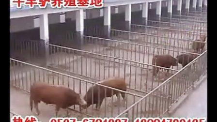 山东济宁十万头牛羊驴养殖基地