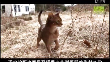 ▶ 貓咪101---阿比西尼亞貓 - YouTube [480p]