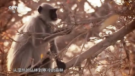 2013纪录片《狂野印度》BD高清国语配音中文字幕(全四集)第一集