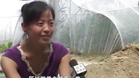 蝗虫养殖视频