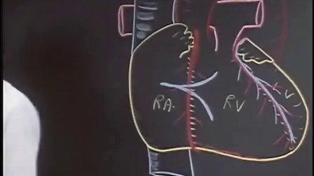 斯坦福大学公开课:临床解剖学 1.人类心脏解剖图 高清