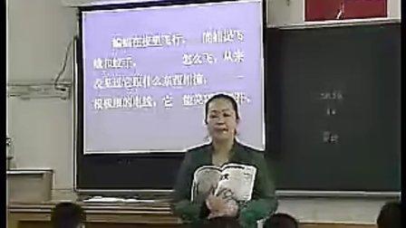 小学语文四年级下册课例《蝙蝠和雷达》许怡雯