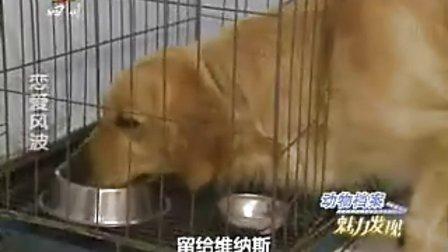 动物档案 魅力发现之恋爱风波2