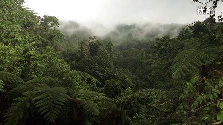 【森林解决方案】巴布亚新几内亚的生态林业3