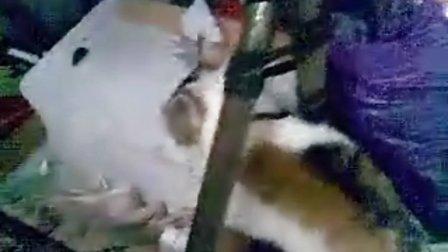 愤怒,居然用开水烫小猫咪