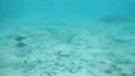 傻老公在水下