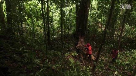 【森林解决方案】巴布亚新几内亚的生态林业8