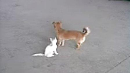 搞笑!小狗小猫打架