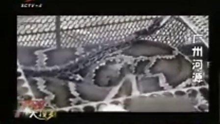 广州河源 小蛇被收养 蟒蛇妈妈找上门