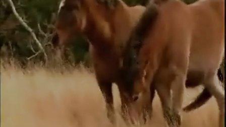 爱上马背人生-----马背人生论坛