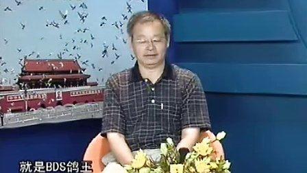 世界名鸽品系大讨论