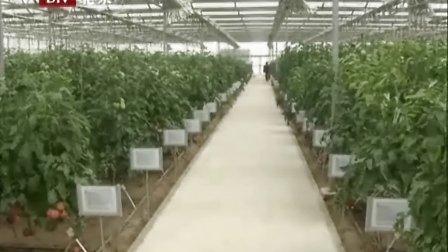 第17届北京种子交易会13日开幕 品种权首次转让拍卖