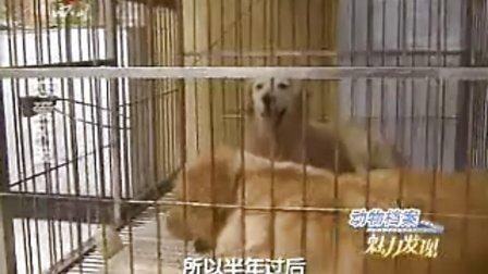 动物档案 魅力发现之恋爱风波1