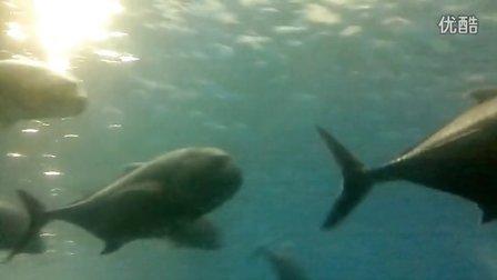 合肥海洋世界鲨鱼和鱼