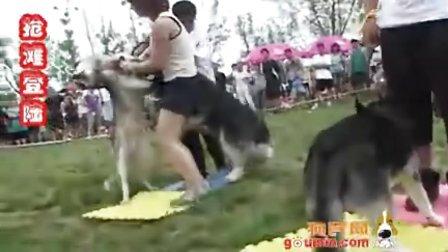 狗民网狗狗趣味运动会天津站