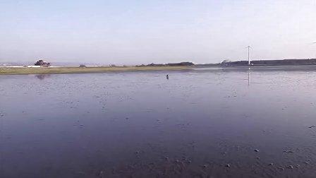 Nilla在高美濕地踩水