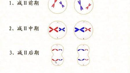 汉水丑生高中生物必修二减数分裂全集新课习题课解题技巧