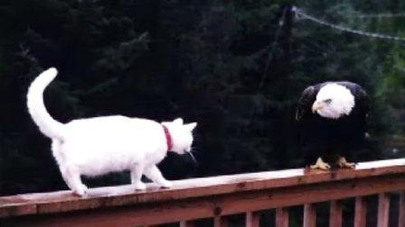 动物搞笑图片集