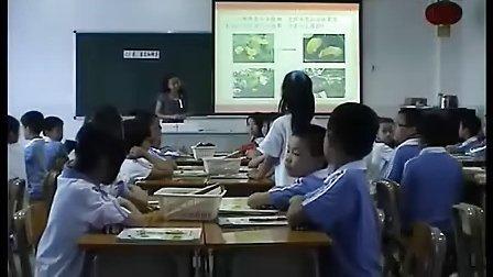 小学四年级科学优质课视频《花果实和种子》邓静怡