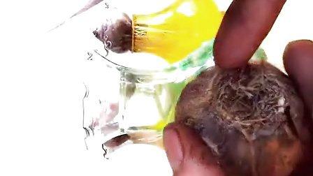 风信子的种植方法 水培土培方法 风信子如何种植 风信子怎么养