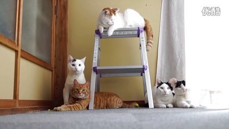猫叔家族集会卖萌
