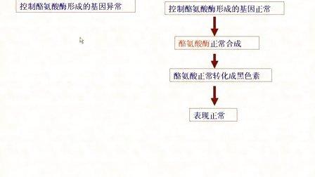 汉水丑生  高中生物 必修二 基因对性状的控制