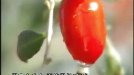 12月21日远程教育农技推广——①富农生力军科技特派员王自贵②反季节香菇栽培技术