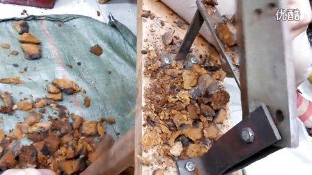 五指山野生灵芝特产店之野生桦褐灵芝切片切碎