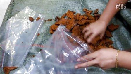 五指山野生灵芝特产店之野生黄芝切片片碎