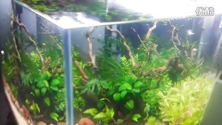 我的60水草造景缸