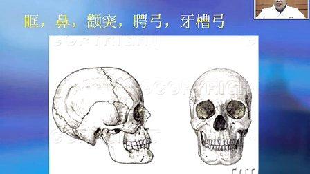 颌骨,肌肉,颞下颌关节1  四川大学口腔解剖生理学 联系Q Q 604118020