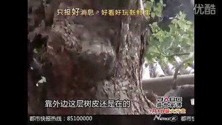 杭州古树美容用泡沫不用水泥了