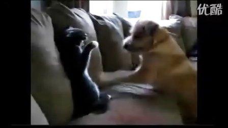 猫狗大战笑喷你