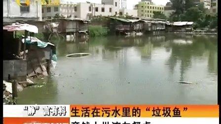 """生活在污水里的""""垃圾鱼""""竟然大批流向餐桌 130911 新闻夜总汇"""