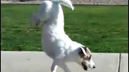 人见人爱的狗狗 这么聪明的狗狗看了你就想拥有