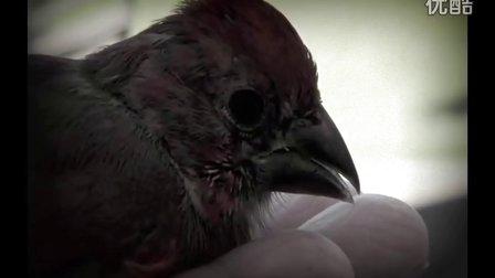 小鸟的一天给我们怎样的提醒呢?