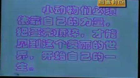山西通宝育杰学校小学二年级美术《出壳了》精彩课堂实录