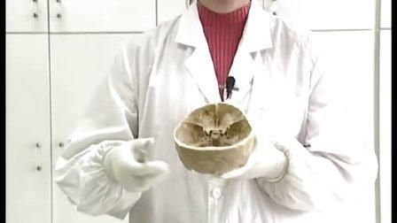 颅骨及其连结(1