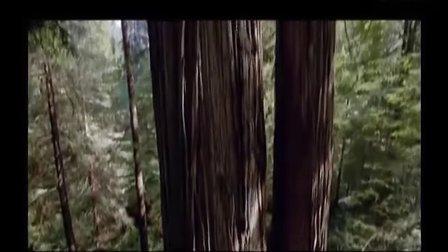 国家一级保护植物-红豆杉