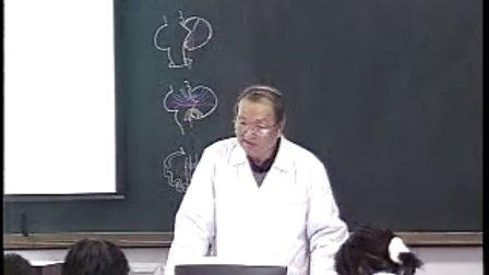 哈医大系统解剖学 21小脑、间脑