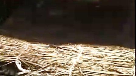 蜂王浆高产优质技术