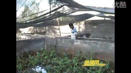 黄鳝养殖视频