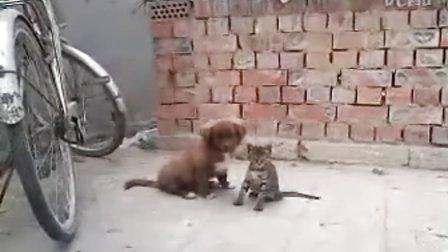 不晓得是在做什么的两只动物?互咬?亲昵?神奇的大自然!