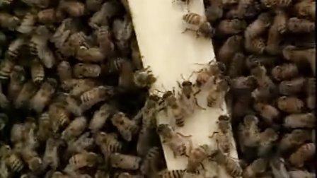 蜂蜜.皇浆生产